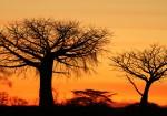 Tanzania: Lake Manyara, Ngorongoro & Serengeti Safari