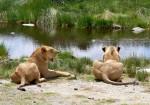 Tanzania Family Safari & Zanzibar