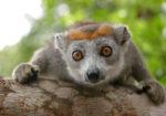 Discover Madagascar with Daniel Razafimandimby