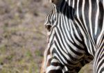 Kruger Photo Safari with Johan van Zyl